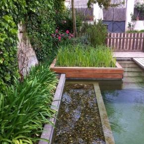 la fuerza del biofiltro en depuraci n de piscinas naturales