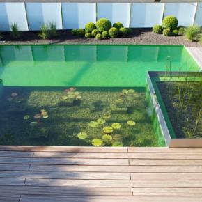 zona de bao y depuracin ecopiscina piscina naturalizada aragrup y teichmeister - Piscinas Naturalizadas