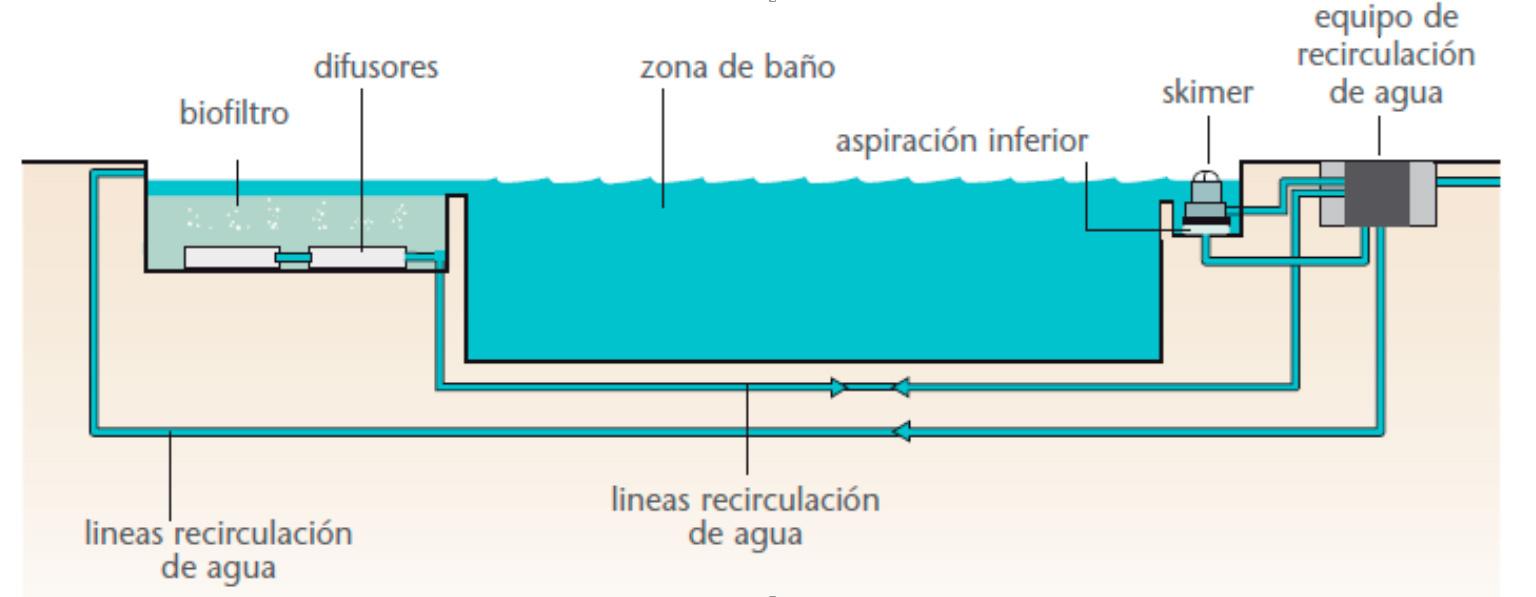 Piscinas naturales piscinas ecologicas naturalizadas for Materiales para construir una alberca