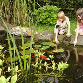 el mundo del estanque es una gama de productos para las mejores caractersticas ornamentales del agua y del entorno del estanque agua ornamental - Piscinas Naturalizadas